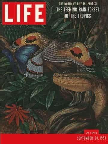 LIFE Magazine September 20