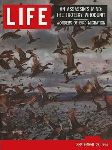 LIFE Magazine September 28